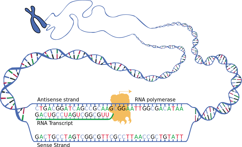 Zellbiologie