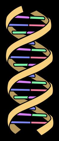 Biologie-Lerntext meiner 9Bio