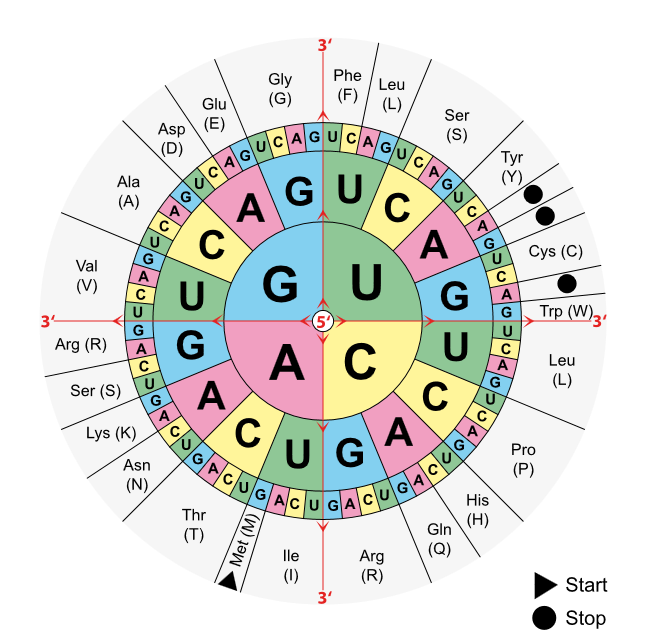 Arbeitsblatt mit Antworten zu Zellbiologie-Klausurfragen