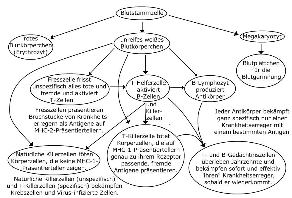 Lerntext Immunsystem