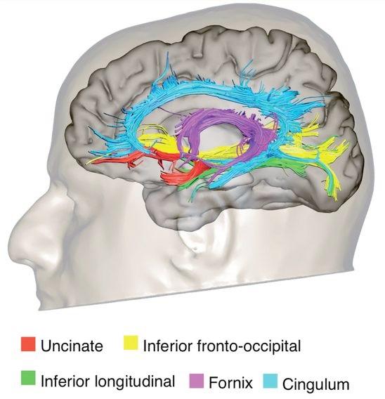 Lerntext über Nervenzellen, Nervensysteme und unser Gehirn