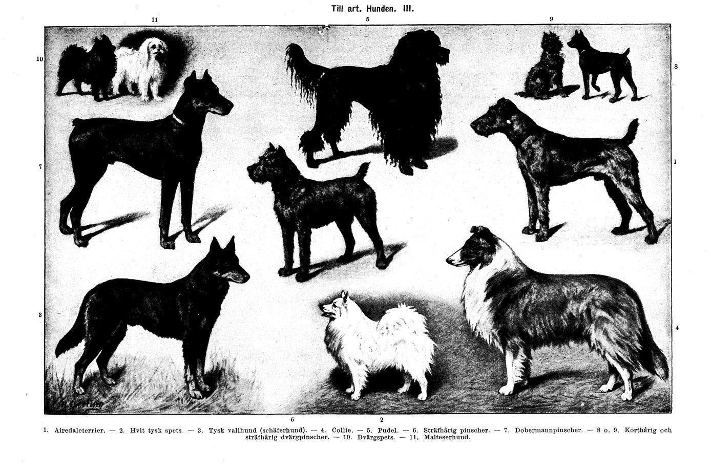 vergleich wolf hund