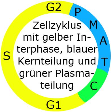 Schulbuch-unabhängiger Lerntext Genetik für die gymnasiale ...